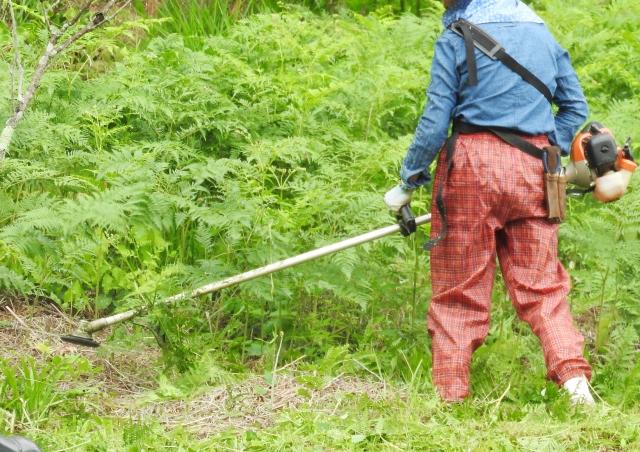 霧島市で草刈りにかかる料金相場は?追加料金や業者選びのコツまで解説