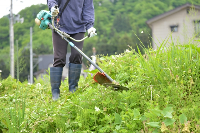 鹿児島市で草刈りに最適な年3回の時期~楽に草刈りを終えるコツまで徹底解説